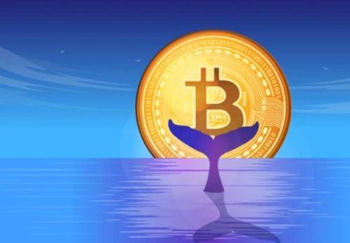 ballena bitcoin