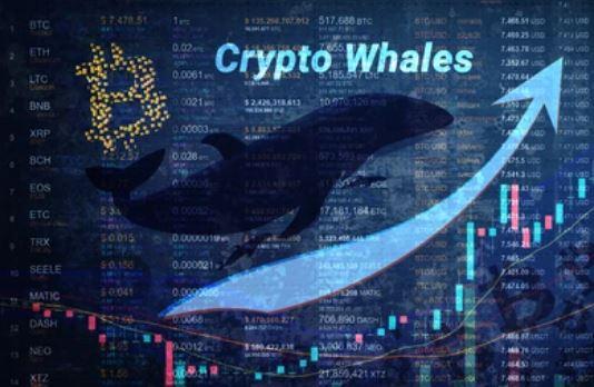 ballena criptomonedas