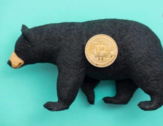 osos criptomonedas